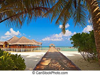 île tropicale, café, maldives