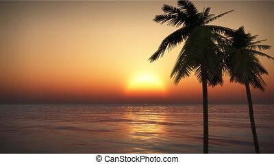 île tropicale, paumes coucher soleil, (1070)