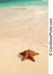 óceán, tengeri csillag, lenget