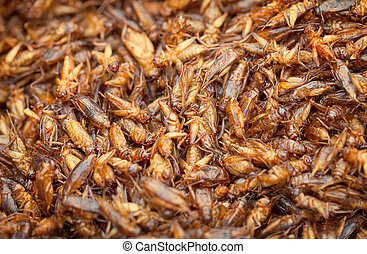 óleo, comestível, insetos, -, grilos, fritado