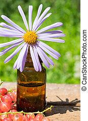 óleo essencial, com, roxo, margarida