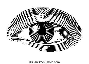 ögon, mänsklig
