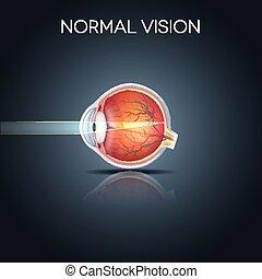ögon, normal