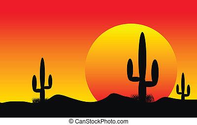 öken, solnedgång, med, kaktus, planterar
