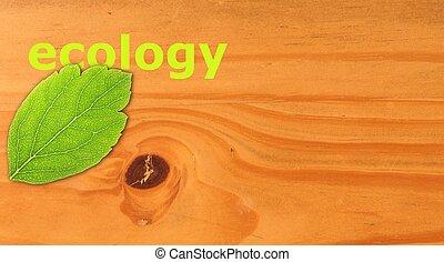 ökológia