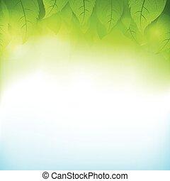 ökologie, blatt, transparent, steigung, abstrakt, 003, grüner hintergrund, begriffe