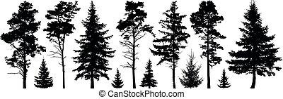 örökzöld, állhatatos, árnykép, elszigetelt, bitófák, erdő