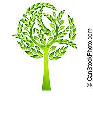 örökzöld fa