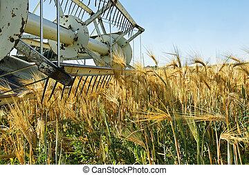 öreg, aratógép, mező, betömött, árpa, kartell