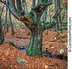 öreg fa, alatt, ősz erdő