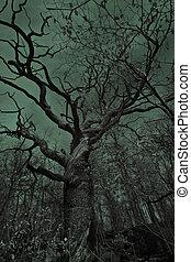 öreg fa, hátborzongató