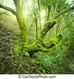 öreg fa, zöld, moha