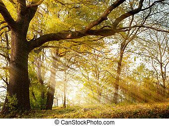 öreg, tölgyfa, alatt, ősz, liget
