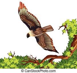 örn, över, flygning, träd