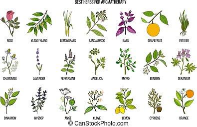 örtar, bäst, aromatherapy