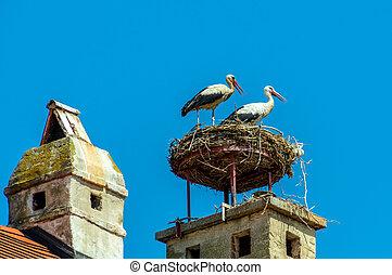 österreich, rust., nest, von, a, storch