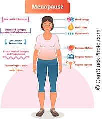 östrogen, intrig, förklaring, illustration., medicinsk, ...