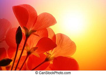 över, blomningen, solsken, röd fond