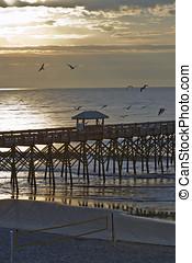 över, dårskap, strand, soluppgång