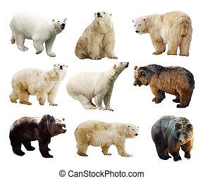 över, sätta, isolerat, vit, Björnar