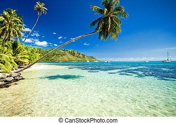 över, träd, bedöva, palm, lagun, hängande