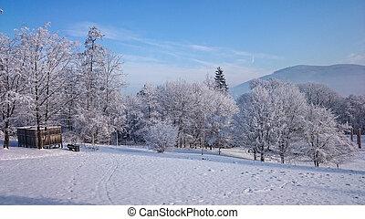 övervintra trees, in, mountains, höjande, med, ny snow