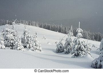 övervintra trees