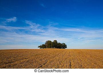 ø, fulde, i, træer, på midten, felt