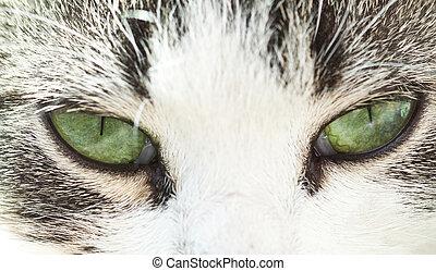 øjne, oppe, kat, s, grønne, lukke