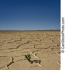 ørken, blokken