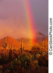 ørken, regnbue