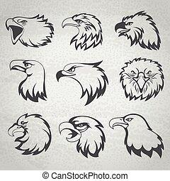 ørn, hovede sæt, isoleret, illustration, vektor, høg, baggrund, falk, hvid, eller, mascot