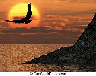 ørn, og, fantastiske, solnedgang