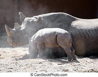 újszülött, orrszarvú, és, övé, anya, alatt, a, zoo.