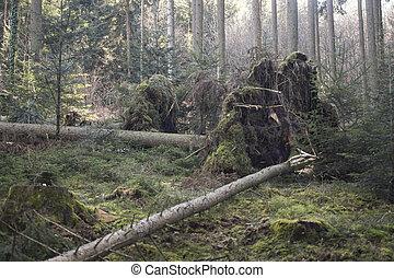 último, sobre, árvore, caiu, magra, tempestade, alto, durante