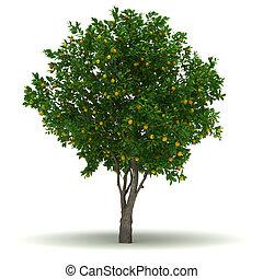 único, árvore alaranjada