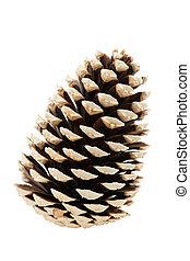único, árvore, cone, pinho
