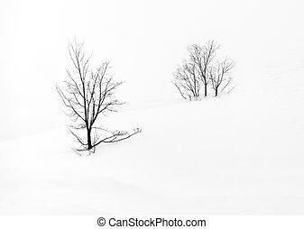 único, árvore, isolado
