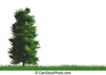 único, árvore, ligado, gramas