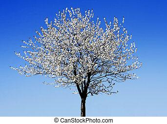 único, florescer, árvore, em, primavera