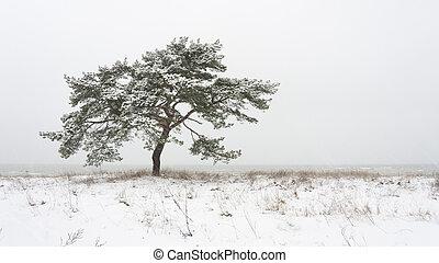 único, inverno árvore, pinho