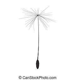 único, semente dandelion, vetorial, ilustração