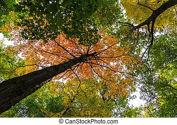 único, vermelho, árvore, em, canopy floresta