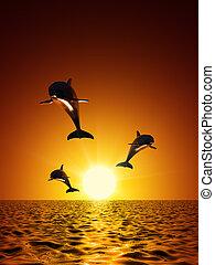 úszás, delfinek, három, óceán