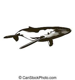 úszás, púpos ember bálnavadászat
