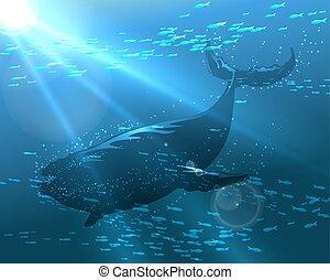 úszó, bálna