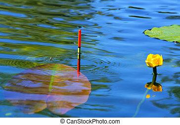 úszó, tó halfajták