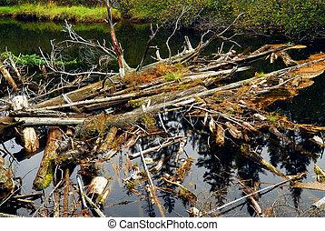 úsztatott fa, alatt, egy, folyó