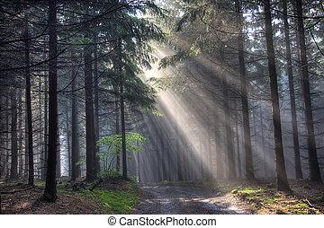 út, és, toboztermő fa, erdő, alatt, köd