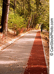 út, alatt, a, erdő, noha, bicikli, vonal